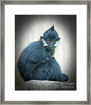 Francois Langur Monkey II Framed Print by Jim Fitzpatrick