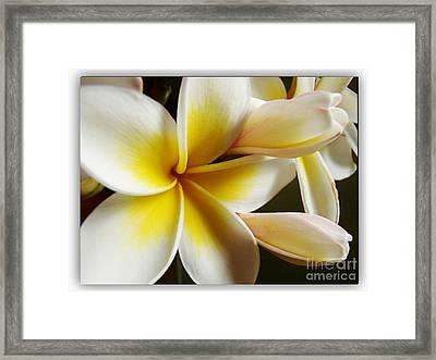 Frangipani 1 Framed Print