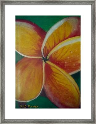 Frangipani Bloom Framed Print