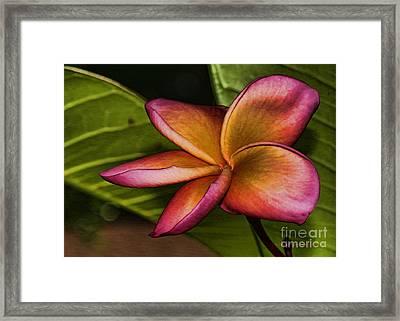 Frangipani Creation Framed Print