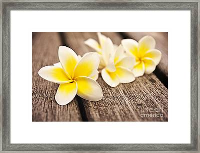 Frangipani Flower Framed Print