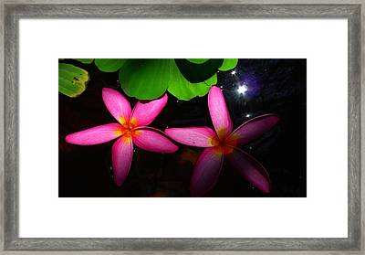 Frangipani Flowers On Water Framed Print