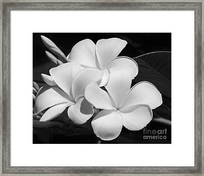 Frangipani In Black And White Framed Print by Sabrina L Ryan