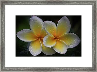 Frangipani Pair Framed Print