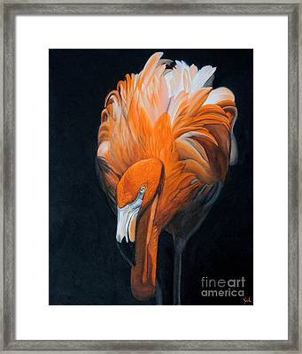 Frank The Flamingo Framed Print by Jane Axman
