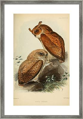 Fraser's Eagle Owl Framed Print