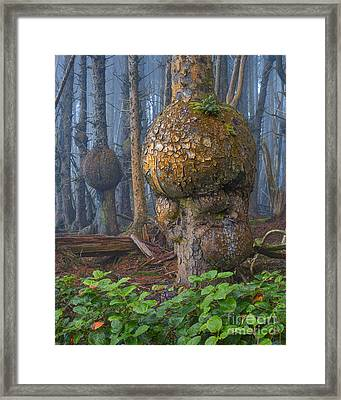 Freaky Forest Dweller Framed Print by Don Hall