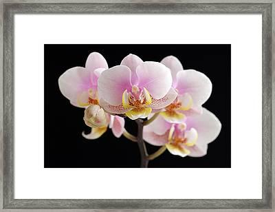 Freckled Bloom Framed Print