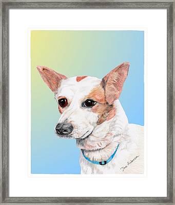 Freckles A Former Shelter Dog Framed Print by Dave Anderson