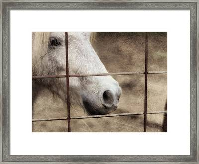 Freckles Framed Print by Amy Tyler