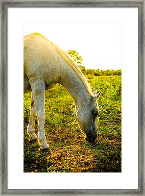 Freckles At Sunset Framed Print by David Morefield