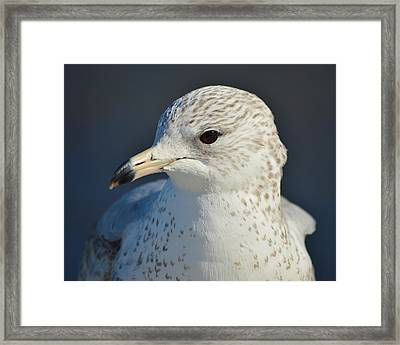 Freckles Framed Print by Thomas  MacPherson Jr