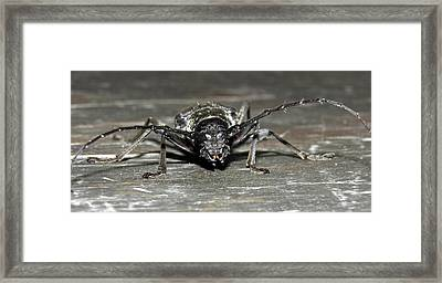 Fred Framed Print by Andrew  Stoffel