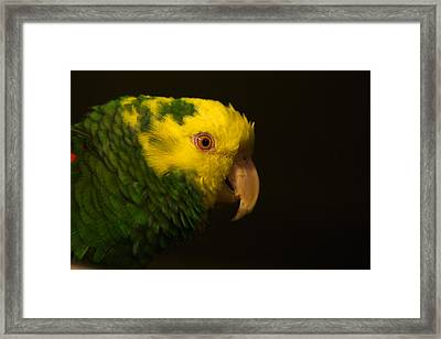 Framed Print featuring the photograph Fred The Amazon Parrot by Melissa Messick