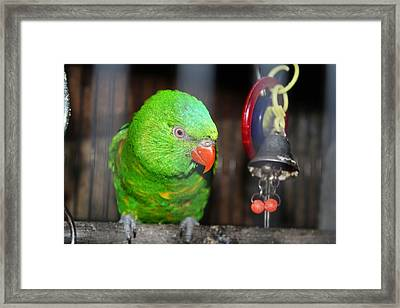 Fred Framed Print by Victoria Roehrig