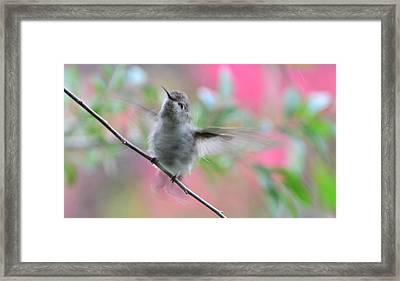 Framed Print featuring the photograph Fredrick - Ahhhhh I Love Bathing by Debby Pueschel