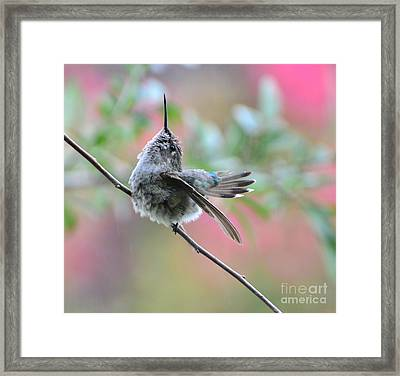 Framed Print featuring the photograph Fredrick Singing In The Rain by Debby Pueschel