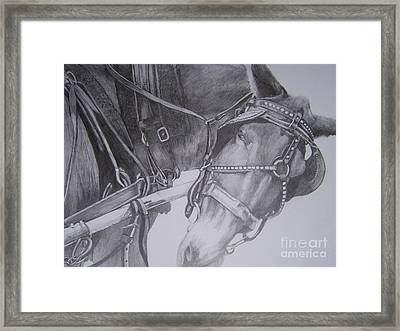 Fred's Mule Framed Print by Phyllis Henson