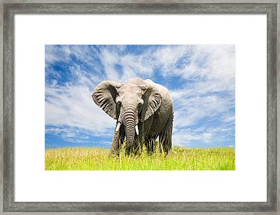 Free African Elephant Framed Print by 1001slide