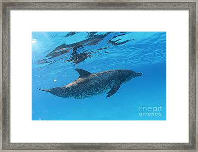 Free Framed Print by Carey Chen