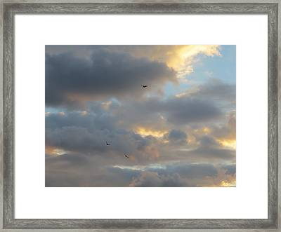 Free As A Bird Framed Print by Jean Marie Maggi