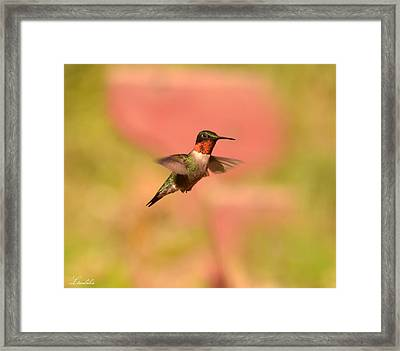 Free As A Bird Framed Print by Lori Tambakis