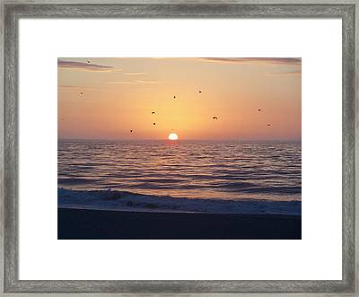 Framed Print featuring the photograph Free As A Bird by Victor Montgomery