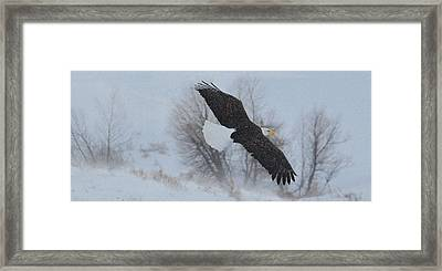 Free At Last.. Framed Print