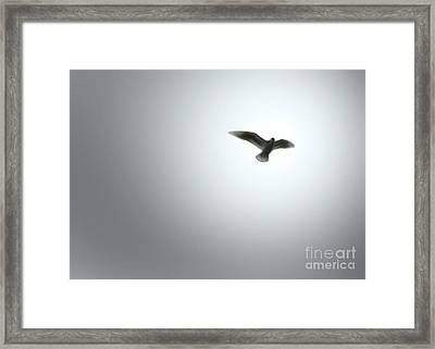 Framed Print featuring the painting Free Bird by Gregory Dyer