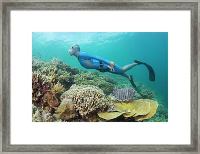 Free Diver Swimming Over Coral Reef Framed Print by Scubazoo
