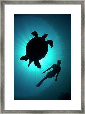 Free Diver With A Turtle Framed Print