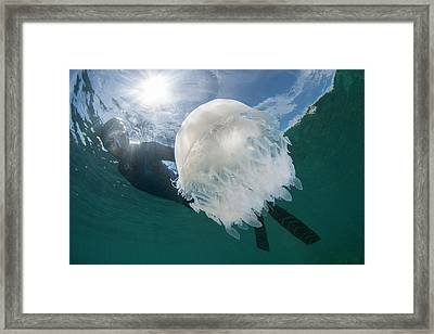 Free Diver With Jellyfish Framed Print