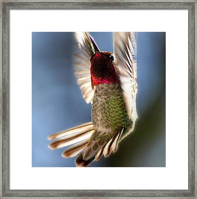 Free Falling Framed Print by Melanie Lankford Photography