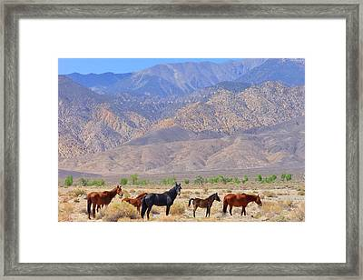 Framed Print featuring the photograph Free For Now by Marilyn Diaz