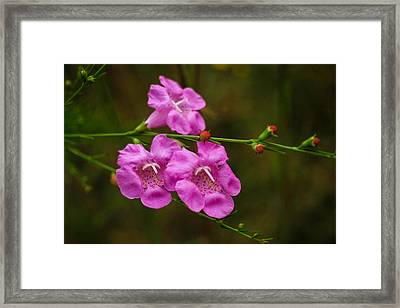 Free Framed Print by Julie Andel