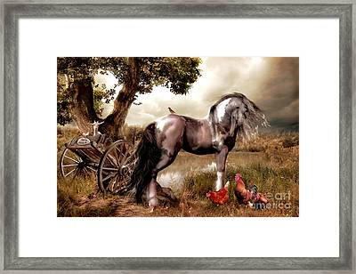 Free Range Framed Print by Shanina Conway