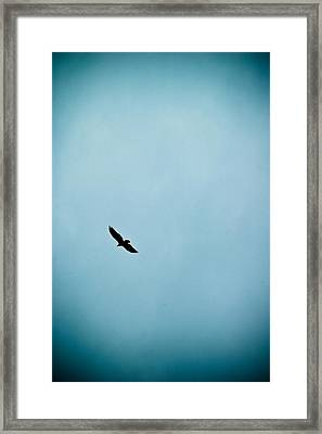 Free Framed Print by Rhonda Barrett