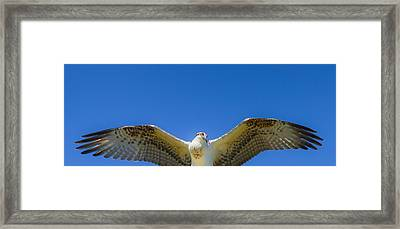 Free Spirit Framed Print by Laura Bentley
