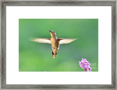 Free To Dance Framed Print
