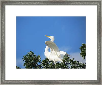 Free To Fly Framed Print by Feva  Fotos