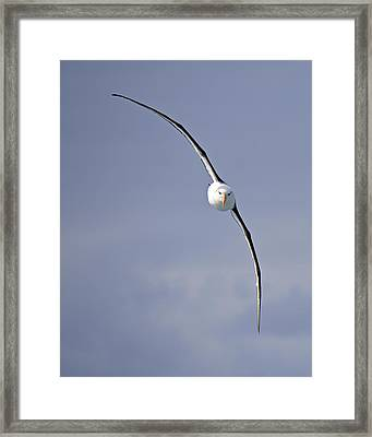 Free To Follow Framed Print by Tony Beck