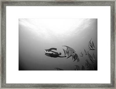 Freediver And Batfish Framed Print