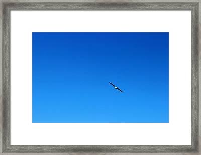 Freedom And Solitude Framed Print by Phoresto Kim