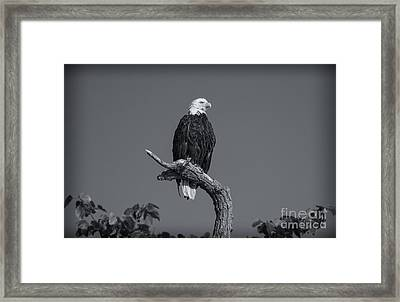 Freedom... Framed Print