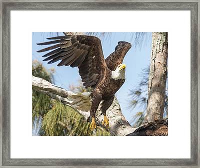 Freedom Framed Print by Doug McPherson