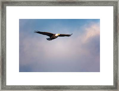 Freedom Flier Framed Print by Bill Wakeley