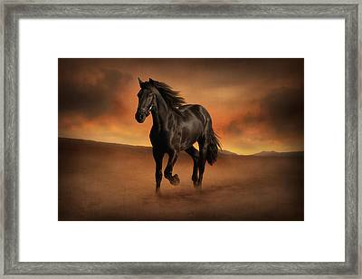 Freedom In The Desert Framed Print