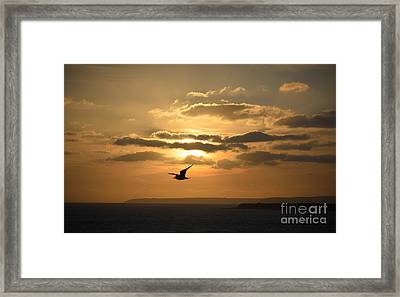 Freedom Framed Print by OUAP Photography