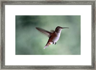 Freedom - Pillow Format Framed Print by Rory Sagner