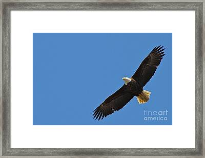 Freedom Framed Print by Rick  Monyahan